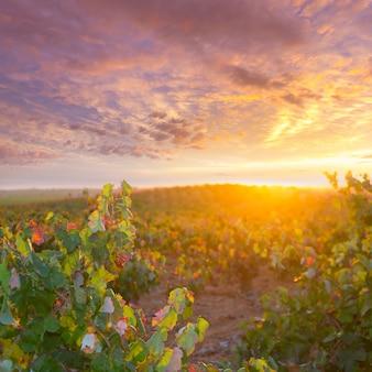 Utiel requenaの秋の黄金の赤いブドウ畑の夕日
