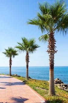 휴가 및 여행 개념 - 여름 해변의 아름다운 야자수