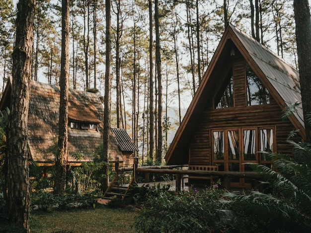 소나무 숲에서 휴가 집
