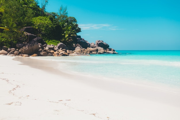 Vacation summer holidays background - sunny tropical caribbean blue lagoon paradise beach with white sand and palms