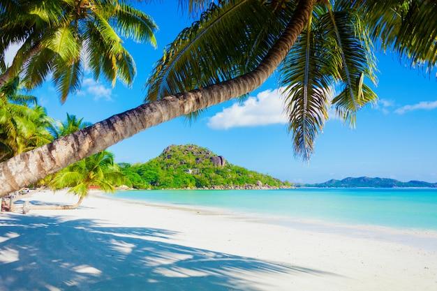 Отпуск летние каникулы фон - солнечный тропический карибский райский пляж с белым песком и пальмами