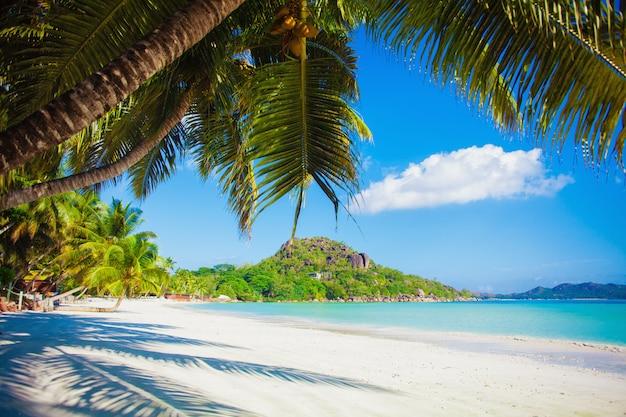 休暇夏の休日の背景-白い砂とヤシの木と日当たりの良い熱帯のカリブ海の楽園ビーチ