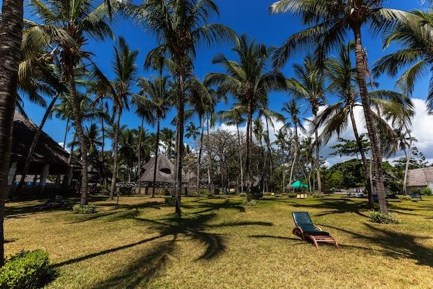 야자수 아래에서의 휴가 휴가를 위한 완벽한 장소는 야자수가 있는 섬에 있습니다.