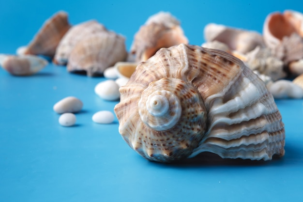 Отдых с морской раковиной на синем
