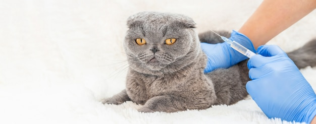 Vaccination of cats. veterinary medicine