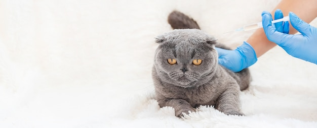 猫の予防接種。獣医学