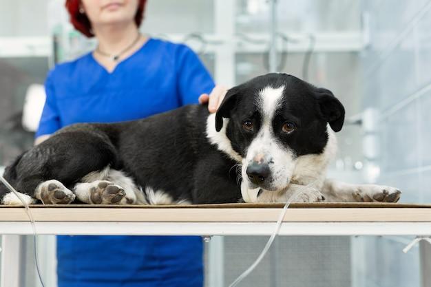 동물 병원에서 개에게 백신 접종