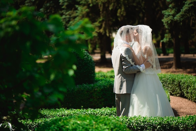 Valentine day. wedding couple kissing covered veil.
