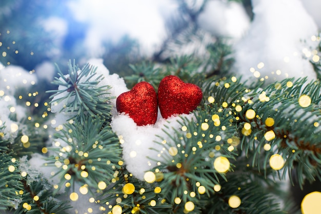 발렌타인 데이 카드. 눈과 그들에 두 개의 빨간색 하트와 크리스마스 나무의 가지.