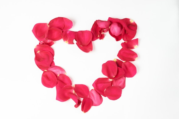 발렌타인 데이 꽃. 핑크 장미 꽃과 꽃잎 복사 공간, 근접와 흰색 배경에