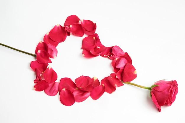 День святого валентина цветы. розовый цветок розы и лепестки на белом фоне с копией пространства, крупным планом