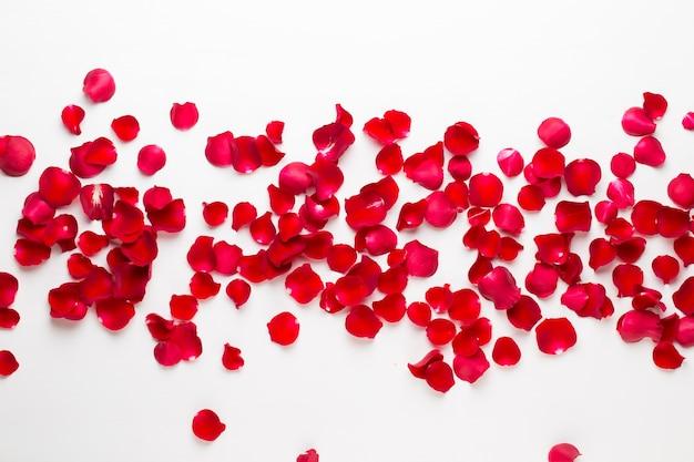 バレンタイン・デー。白い背景の上のバラの花の花びら。バレンタインデーの背景。フラットレイ、上面図、コピースペース。