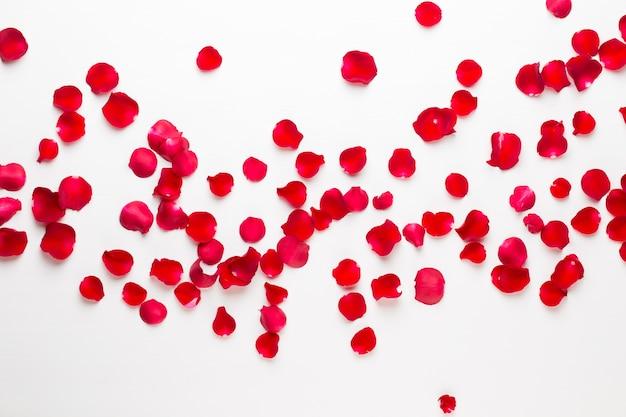День святого валентина. лепестки цветов розы на белом фоне. день святого валентина фон. плоская планировка, вид сверху.