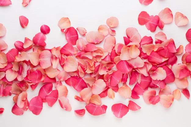 バレンタイン・デー。白い背景の上のバラの花の花びら。バレンタインデーの背景。フラットレイ、上面図。