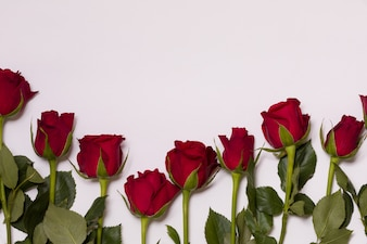 Valentines day background, seamless white background with red rose border