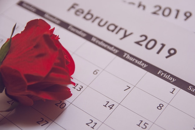 Valentines day. red rose on calendar page february 14 with copy space