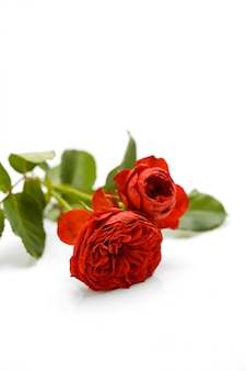 Valentines day red rose with leaves