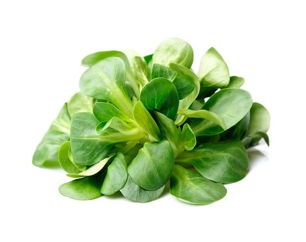 Салат из листьев валерианы. изолированный кукурузный салат. салат из салата.