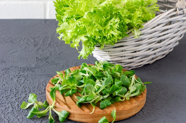 Валерианелла локуста, кукурузный салат, салат ягненка. свежие зеленые листья салата кукурузы на деревянном столе.