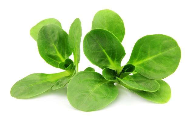 Валерианелла локуста, кукурузный салат, салат ягненка