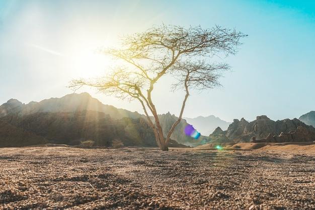 Долина в пустыне с деревом акации, горной скалой и облаками на заднем плане. красивый пейзаж пустыни с одиноким деревом и скалистым фоном.