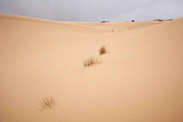 Долина в синайской пустыне с песчаными дюнами