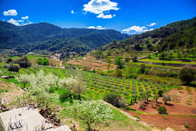 Valley with olive grove and vineyard