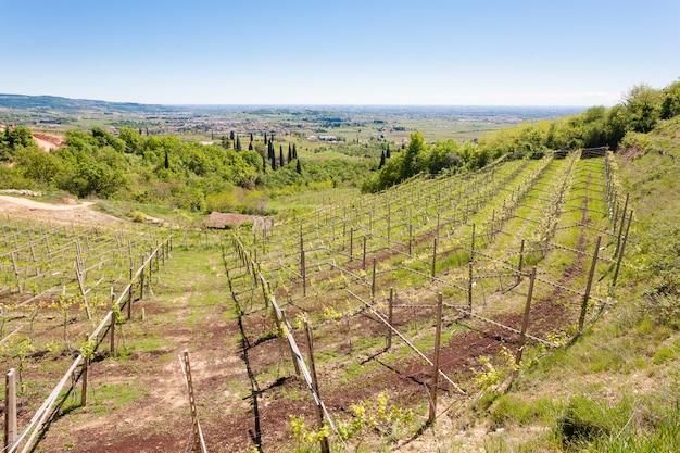 ヴァルポリチェッラの丘の風景、イタリアのブドウ栽培地域、イタリア。田園風景