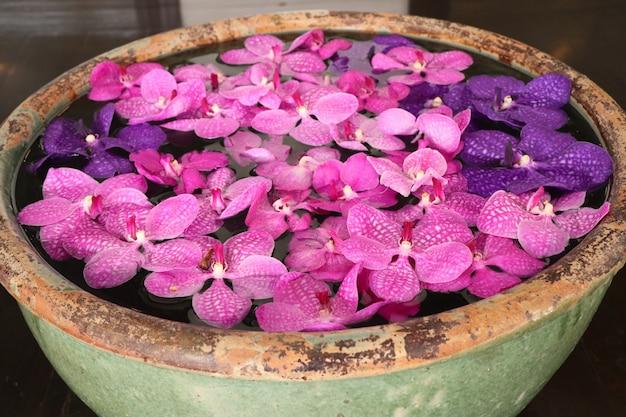 Vanda orchids flower in water
