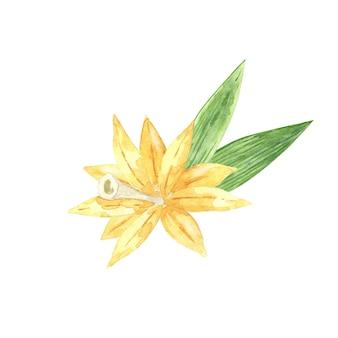 Цветок ванили с палочками и зелеными листьями