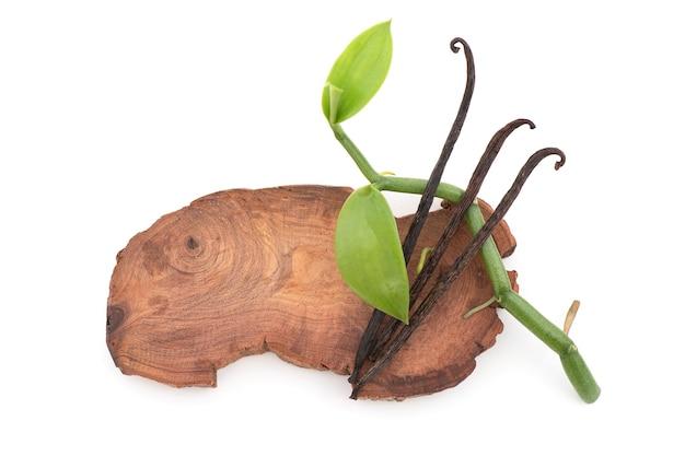 바닐라 녹색 잎, 흰색 배경에 분리된 말린 꼬투리.