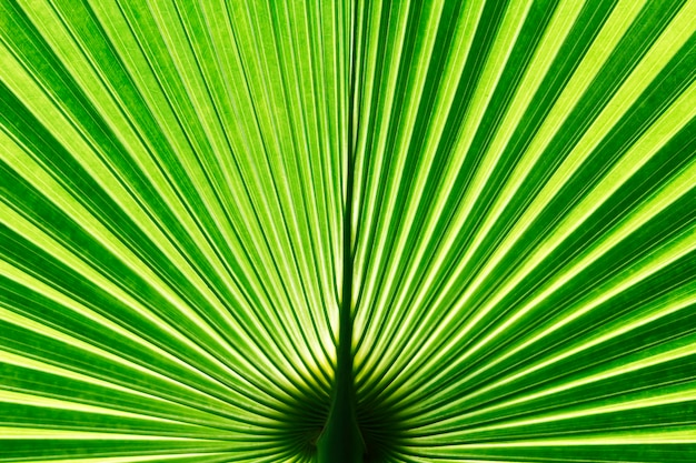 Вануату веерный пальмовый лист Premium Фотографии