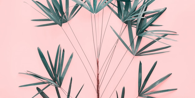 Variations tropical palm leaves flat lay top view
