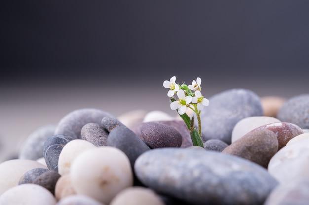 Разнообразная галька с небольшим углом зрения белого цветка