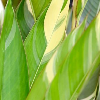 Variegated leaves, nature.