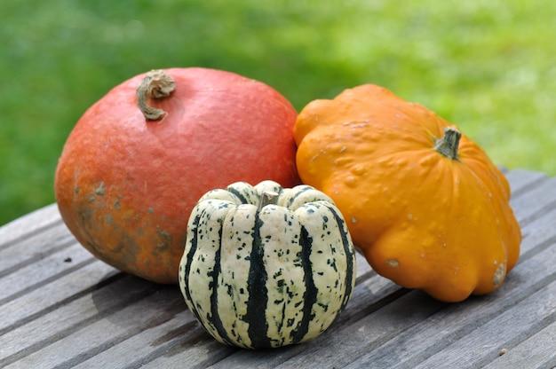 Varieties of pumpkins