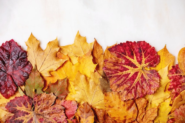 Variety of autumn leaves