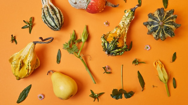 Variety of autumnal pumpkins, leaves and flowers