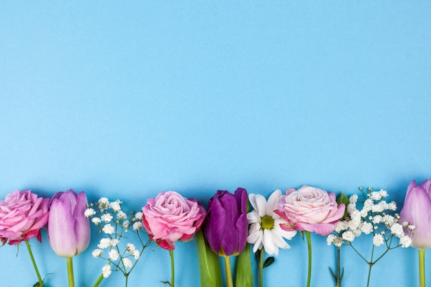 Variety of beautiful flowers arranged on bottom of blue background