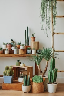 Variety of cacti and succulents for home decor
