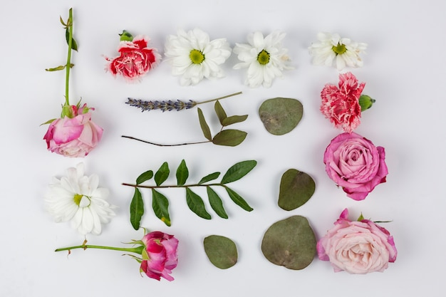 Variety of flowers with leaves against white backdrop