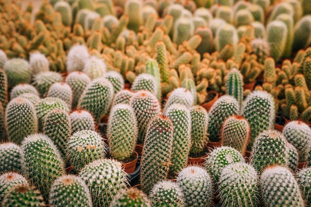 Variety of green cactus plant in pot