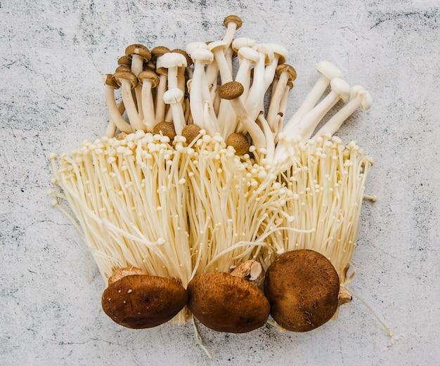 Variety of mushrooms on floor
