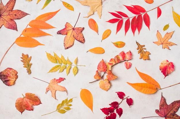 秋の様々な葉のトップビュー