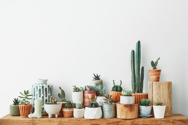 가정 장식을 위한 다양한 선인장과 다육 식물