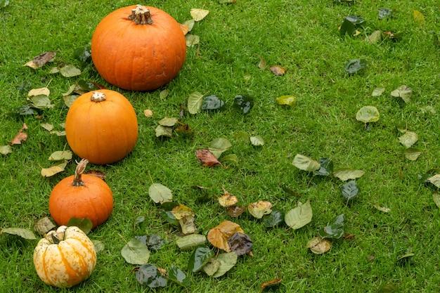 Разнообразие красочных тыкв среди осенних листьев на траве. оформление концепции helloween.