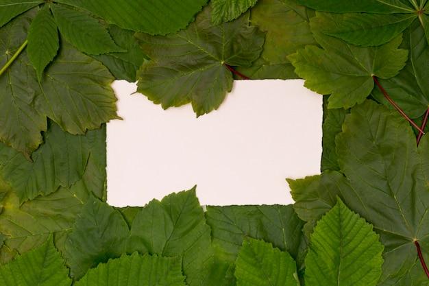 モックアップスペースと緑の葉の様々な