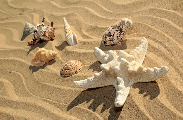 夏の海の砂浜に浮かぶさまざまな形や色のヒトデや貝殻