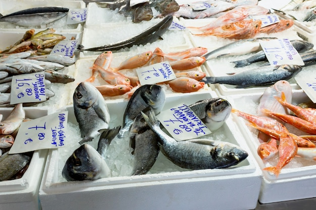 Variety of sea fishes on the counter in a greek fish shop