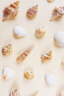 A variety of seashells on on beige.